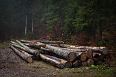 Logging and logs in the Jura Mountains, Giron, Ain, France.