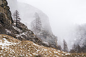 Gran Paradiso National Park, Aosta Valley, Italy.