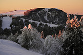 From the stubble of Wissgrut (1124m), winter evening, snow, view of the summit of the Ballon d Alsace, Sewen, Haut-Rhin, France