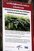 Sign, non-chemical fight against Japanese knotweed, park, Besançon, France