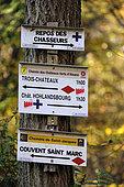 Signs, path markers, Chemin des Châteaux forts d'Alsace, Saint-Marc convent, forest, towards the 13th century Pflixbourg castle, Wintzenheim, Haut-Rhin, France