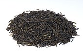 Wild rice (Zizania palustris)
