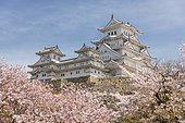 Blossoming cherry trees, Japanese cherry blossom, Himeji Castle, Himeji-j?, Shirasagij? or White Heron Castle, Himeji, Hy?go Prefecture, Japan, Asia