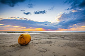Yellow buoy washed up on an Opal Coast beach at sunset, Pas de Calais, France