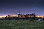 Coquelles Mill at sunrise, Pas de Calais, France