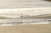 Char à voile sur la plage de Boulogne sur mer, côte d'Opale, Pas-de-Calais, France