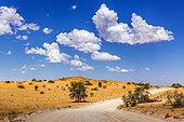 Desert red dune safari road in Kgalagadi transfrontier park, South Africa