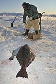 Inuit fisherman during longline fishing on Ilulissat Fjord, Greenland, Arctic North America, North America