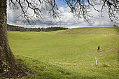 A walker in a typical pastoral and forest environment of the Haut-Jura, Belleydoux, Jura, France.