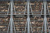 Intensive poultry farm chickens in transit between France and Italy in a truck. Hautes-Alpes, France.