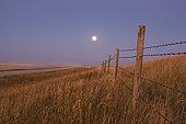 September 15, 2008 - Harvest Moon down the road, Gleichen, Alberta, Canada.