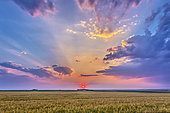 August 6, 2014 - High dynamic range photo of a red setting Sun in haze, casting shadows across the sky, crepuscular rays, and lighting the clouds over a ripening wheatfield in Alberta, Canada.