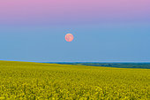 July 12, 2014 - The supermoon rising above a canola field in southern Alberta, Canada. The moon is in the blue of Earth's shadow and below the pink Belt of Venus band.