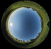 July 16, 2017 - A 360 degree panorama demonstrating the natural polarization of the sky in a band 90 degrees away from the Sun. The band stretches from top to bottom vertically across the sky, with the rising morning Sun in the east at left. The waning last quarter moon is also 90 degrees from the Sun at lower centre to the south. The moon disk is enlarged 3x as per planetarium standards to make it more visible in the 360 degree sky. North is at the top.