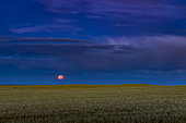 The Harvest Moon of September 13, 2019, which was also the apogee (smallest) Full Moon of 2019. Photographed in southern Alberta, Canada.