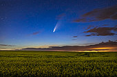 Comet NEOWISE (C/2020 F3) over a ripening canola field in southern Alberta, Canada, on the night of July 15-16, 2020. Light pollution from a nearby gas plant reflecting off low clouds adds the yellow at right.