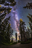 The summer Milky Way with the Summer Triangle stars through pine trees, photographed from the Howse Pass Viewpoint at Saskatchewan River Crossing, Banff National Park, Alberta, Canada. Jupiter is the bright object at the bottom.