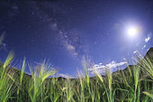 The Milky Way shines brightly against the waxing moon over a hulless barley field in Tibet, China.