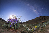 Spring has flowered in Tibet plateau of China, as seen in this single fisheye view from Yamdrok Lake, 4500m above sea level. The blooming flower under the rising last quarter moon is Iris, taken its name from the Greek word for a rainbow.