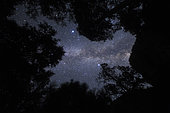 The Milky Way appears overhead in a forest in California. Vega is visible in the middle top of image.