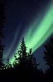 Aurora borealis above the trees, Yellowknife, Northwest Territories, Canada.