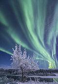Northern lights, Yukon River, Yukon, Canada.