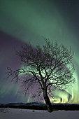 Northern lights, Yukon River, Canada.