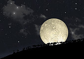 An artist's illustration of a full moon rising behind a row of hilltop trees with a star filled sky as background.