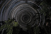Southern Sky star trails over Banksia Trees, Gippsland, Victoria, Australia.