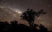 Star trails and the Milky Way, Glenmaggie, Victoria, Australia.