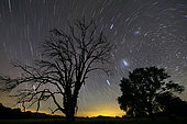 Southern skies star trails, Mudgee, New South Wales, Australia.