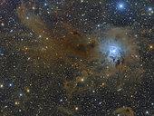 The Iris Nebula, NGC 7023, a reflection nebula in the constellation Cepheus.
