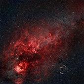 Constellation Cygnus showing the North America Nebula, Pelican Nebula, Cirrus Nebula, Crescent Nebula, Tulip Nebula, and Butterfly Nebula.