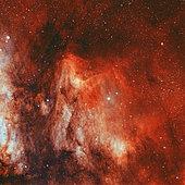 IC 5070, the Pelican Nebula.