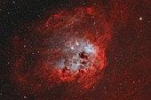 IC 410, The Tadpole Nebula in Auriga.
