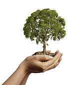 Woman's hands holding soil with a tree. Viewed from a side, on white background.