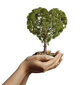 Woman's hands holding soil with a tree heart shaped. Viewed from a side, on white background.