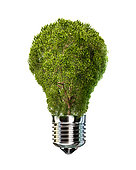 Light bulb with tree inside glass, isolated on white background.