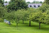 Beehives in an orchard, Dol de Bretagne, Ille et Vilaine, Brittany, France