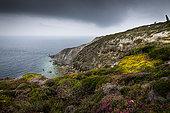 Cliffs of Cap de la Chèvre in summer, Crozon peninsula, Finistère, Brittany, France