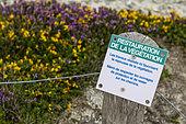 Pancarte indiquant au promeneur une zone de protection de la végétation, Cap de la Chèvre, presqu'île de Crozon, Finistère, Bretagne, France