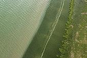 Green algae on the beach of Binic, Côtes d'Armor, Brittany, France