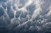 Mammatus, hanging, bag-like source forms at the bottom of a Storm cloud (Cumulonimbus), Baden-Wüttemberg, Germany, Europe