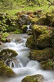 Gorge de Perrefitte, small gorge, brook Chalière, Perrefitte, Bernese Jura, Bern, Switzerland, Europe