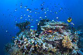 """The reef at the foot of the """"Coude à Jojo"""" buoy in the S-shaped channel. Mayotte"""