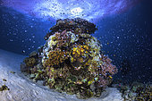 """The coral semaphore, like a lighthouse, a coral """"tower"""" stands on the edge of the S-shaped channel. Mayotte"""