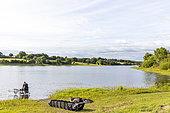 Carp fishing, Lake Finfarine, Poiroux, Marais vendéen, Talmont St Hilaire, Vendée, Pays de Loire, France