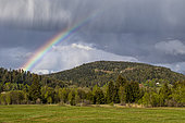 Vosges mountain landscape with rainbow in spring, Around Le Tholy, Vosges, France