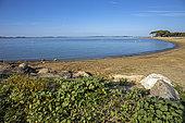 Beach landscape of the Var coast in summer, Miramar Beach in La Londe les Maures, Var, France