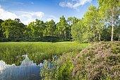 Lake in Craigellachie National Nature Reserve, Scotland, Great Britain
